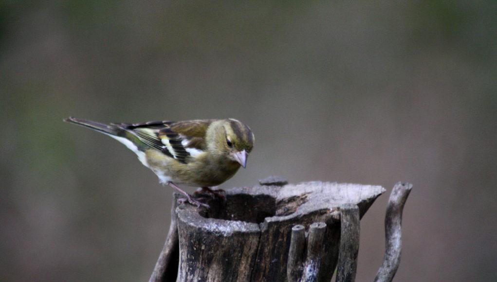 ציפור, שמורת טבע, עץ
